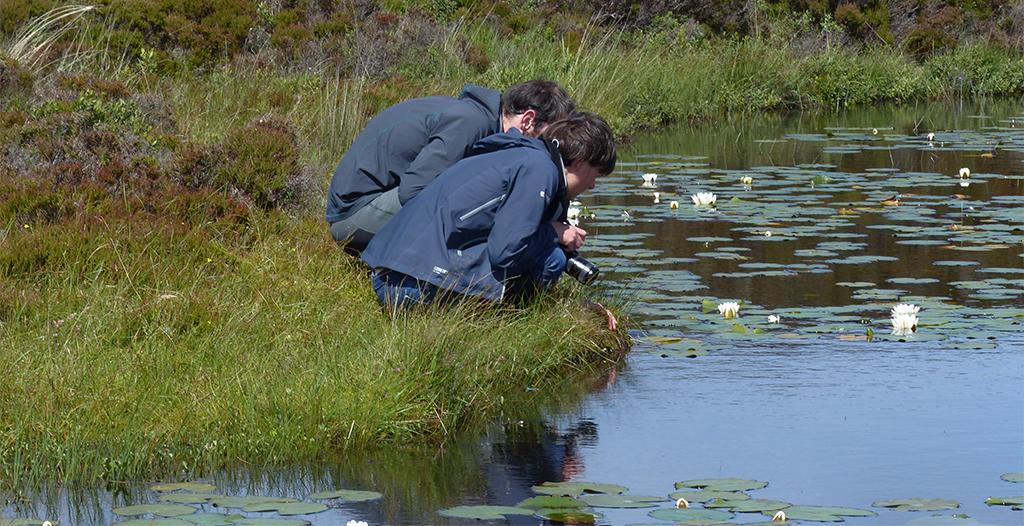 Hebridean Nature Notes