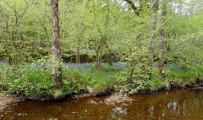 Craighoyle Woodland SSSI, Argyll